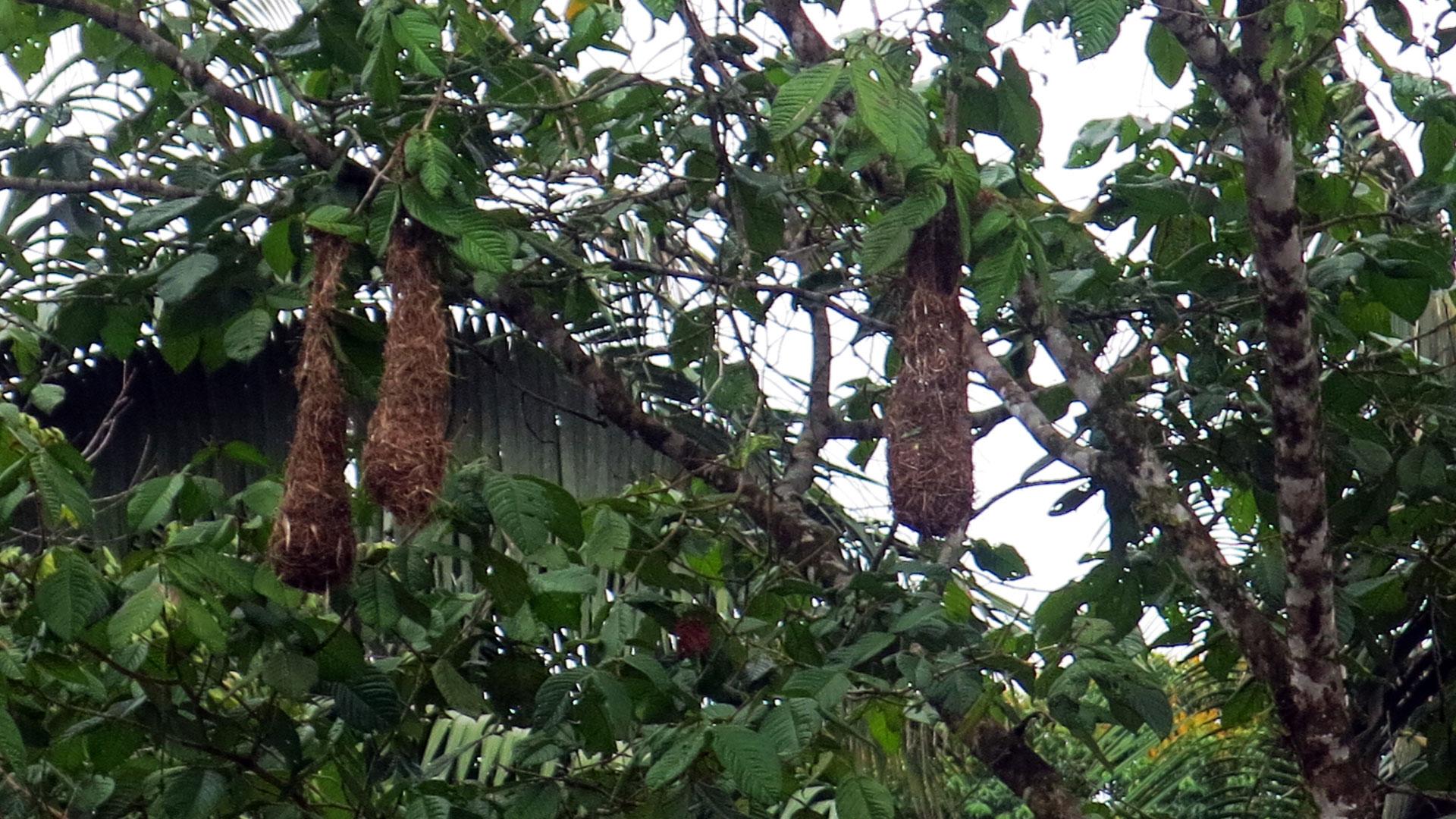 Fotografía de nidos de aves en un árbol