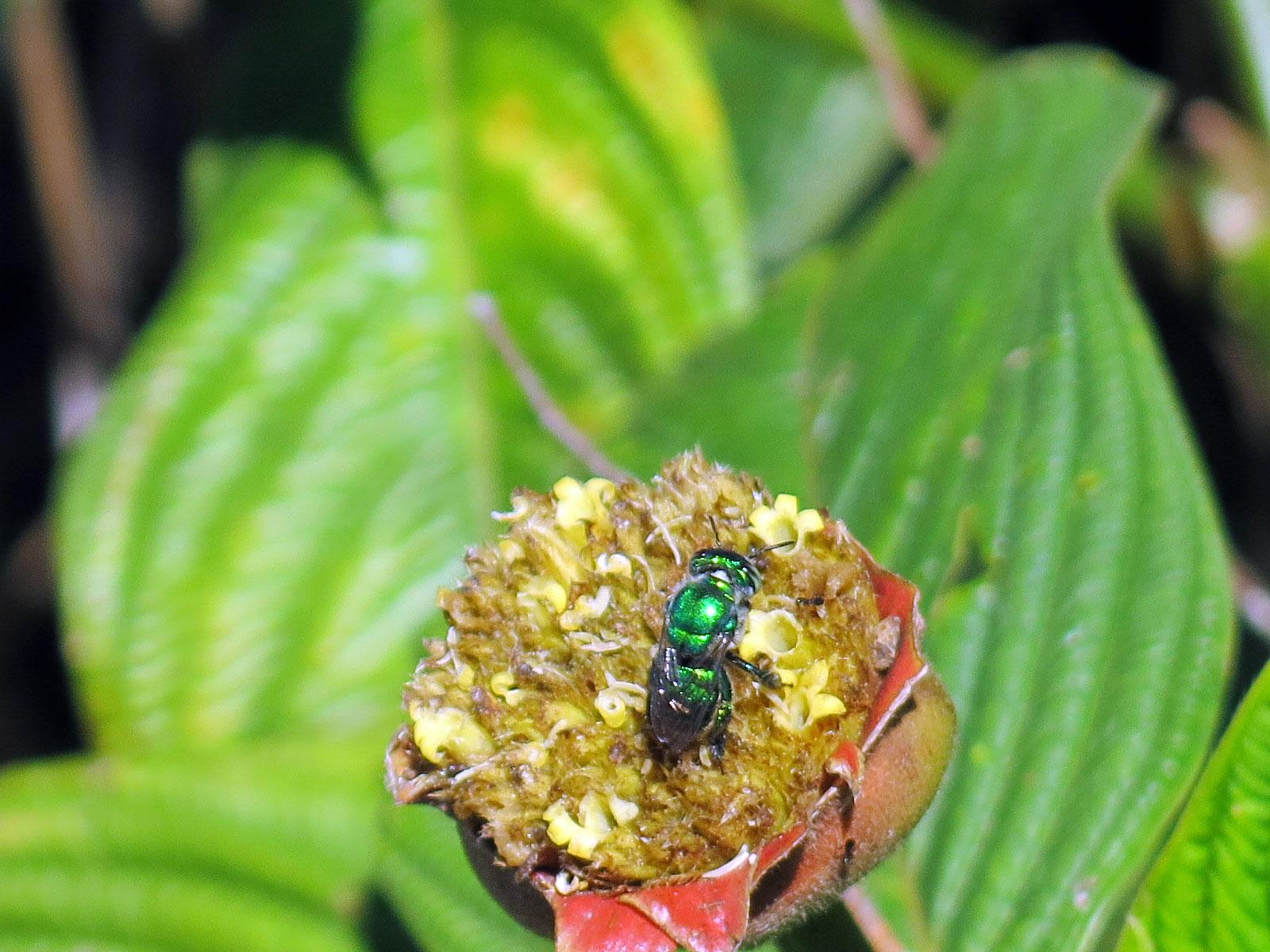 Fotografía de una mosca sobre una planta