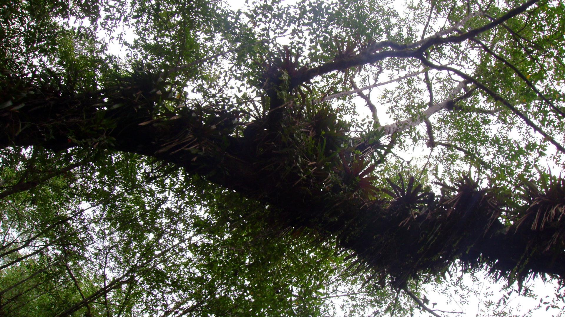 Fotografía de un árbol y sus ramas visto desde abajo